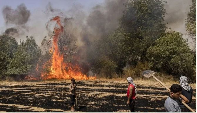 A silent catastrophe: Forests burning across Iran